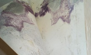 mold problems can be hard to see